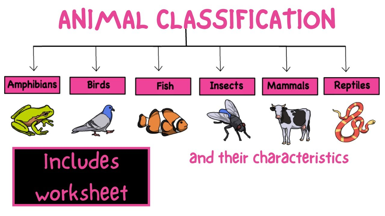hight resolution of Animal classification. Science for kids - My pals are here! - YouTube