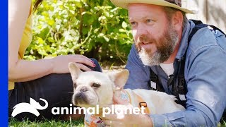 Cameraman Can't Resist Adopting This Adorable Frenchie! | Amanda To The Rescue