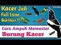 Cara Pemasteran Kacer Paling Efektif Langsung Nempel Ngeplong(.mp3 .mp4) Mp3 - Mp4 Download