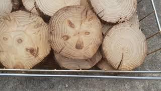 [미술전시회] 폴카닷 그림액자 작품 재료 폴카언니 나무…