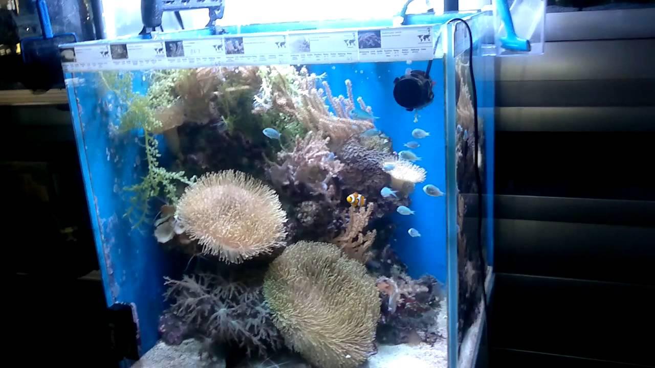 220 liter meerwasser aquarium w rfel 60x60x60 mit. Black Bedroom Furniture Sets. Home Design Ideas