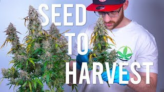 Gambar cover SEED TO HARVEST: BLUE DREAM AUTOFLOWER (BEGINNERS GUIDE)