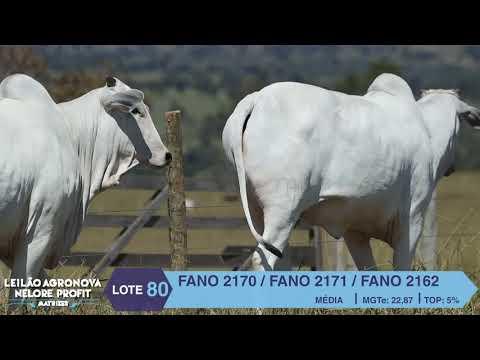 LOTE 80 FANO 2170 X 2171 X 2162