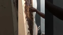 Termite Control in Chennai | Acme Pest Control