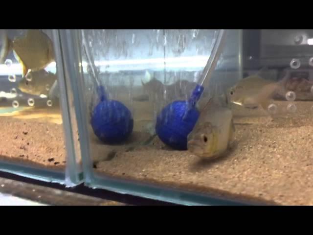 Piranha Pet Shop
