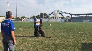 Belgian malinois dog   ukan   fci ipo wc 2018   from taiwan