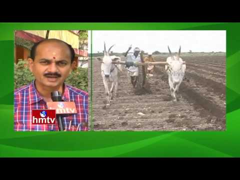 Capsicum Cultivation |Summer Prediction To Farmers| Organic