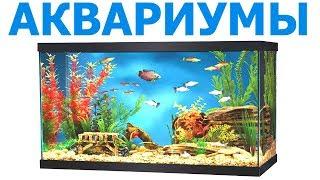 АКВАРИУМЫ в Твери купить, аквариумные рыбки, корма