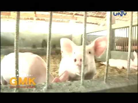 Sambali Organic Farm in Botolan, Zambales