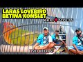 Lovebird Konslet Laras Team Kobar Sf Anniversary Kades Bulay Feat Kjm Sultan Akbar  Mp3 - Mp4 Download