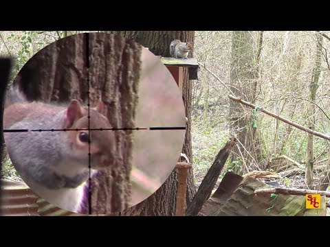 Pest Control with Air Rifles - Squirrel Shooting - 4 Sessions of Bro