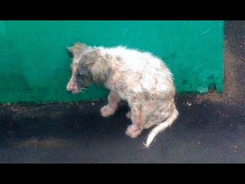 Russian Street Dog Rescue