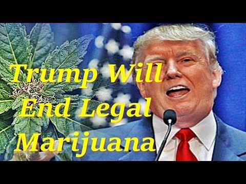 Donald Trump Will End Legal Marijuana