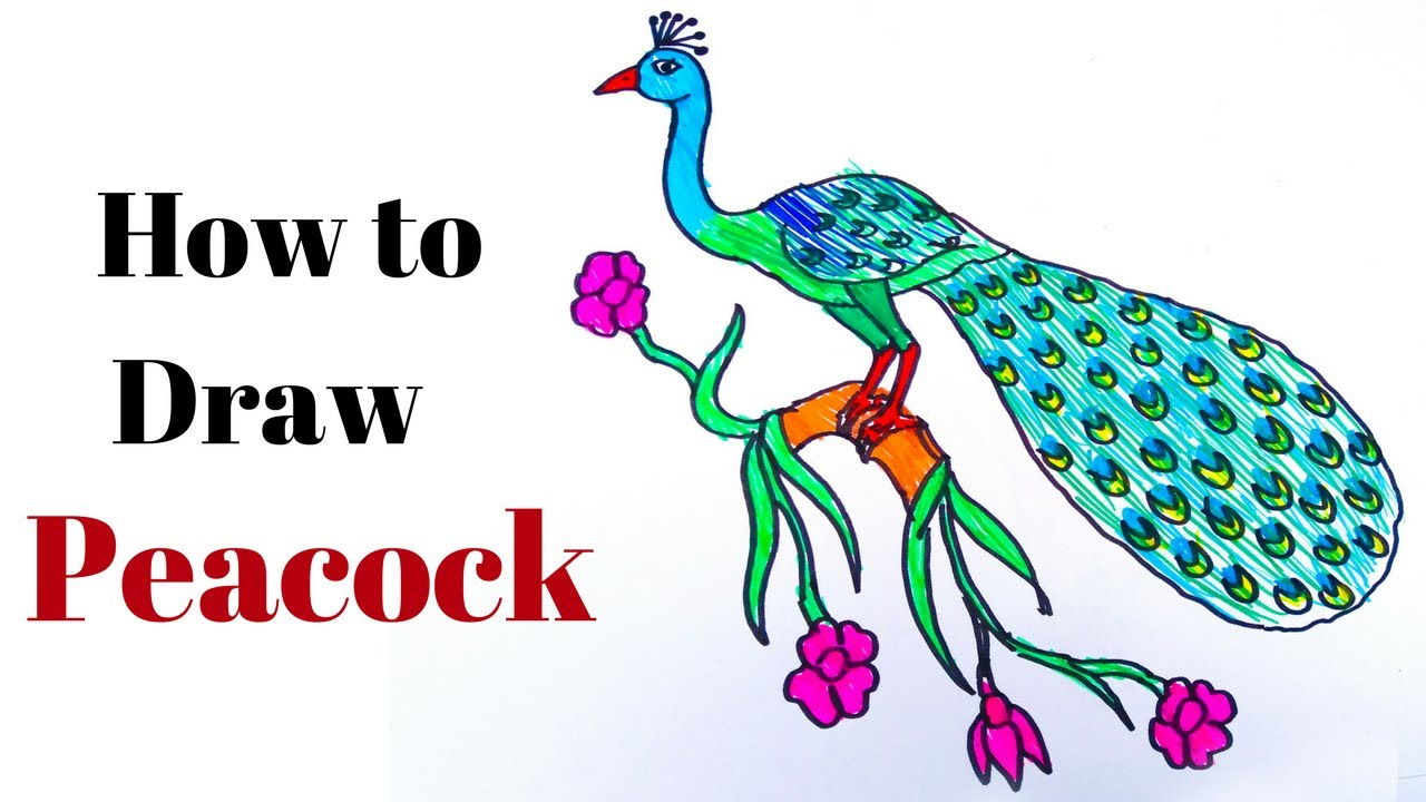 How To Draw A Peacock (realistic) -in easy steps for ...
