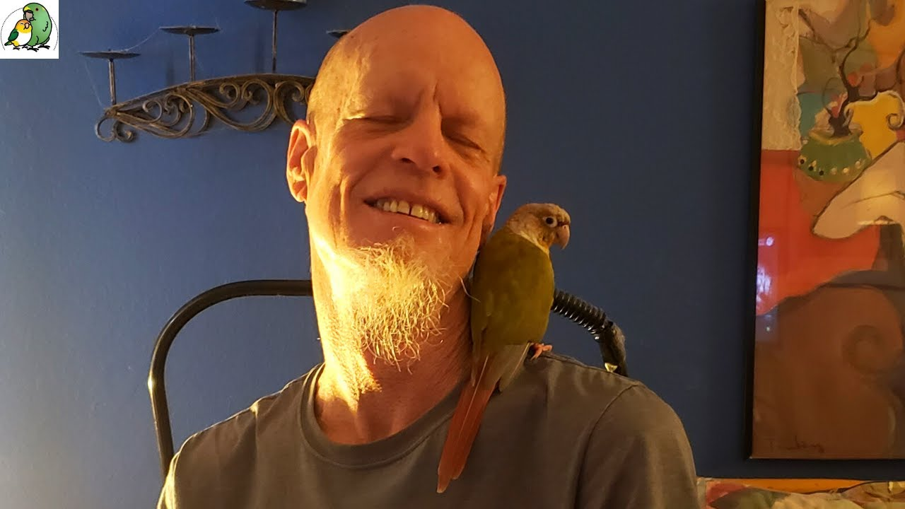 Emergency Parrot Rescue For a Parrot Whose Owner Has Fallen ill