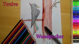 Vocabulary For Kids 01 : Coloring for Kids with  number twelve et woodpecker