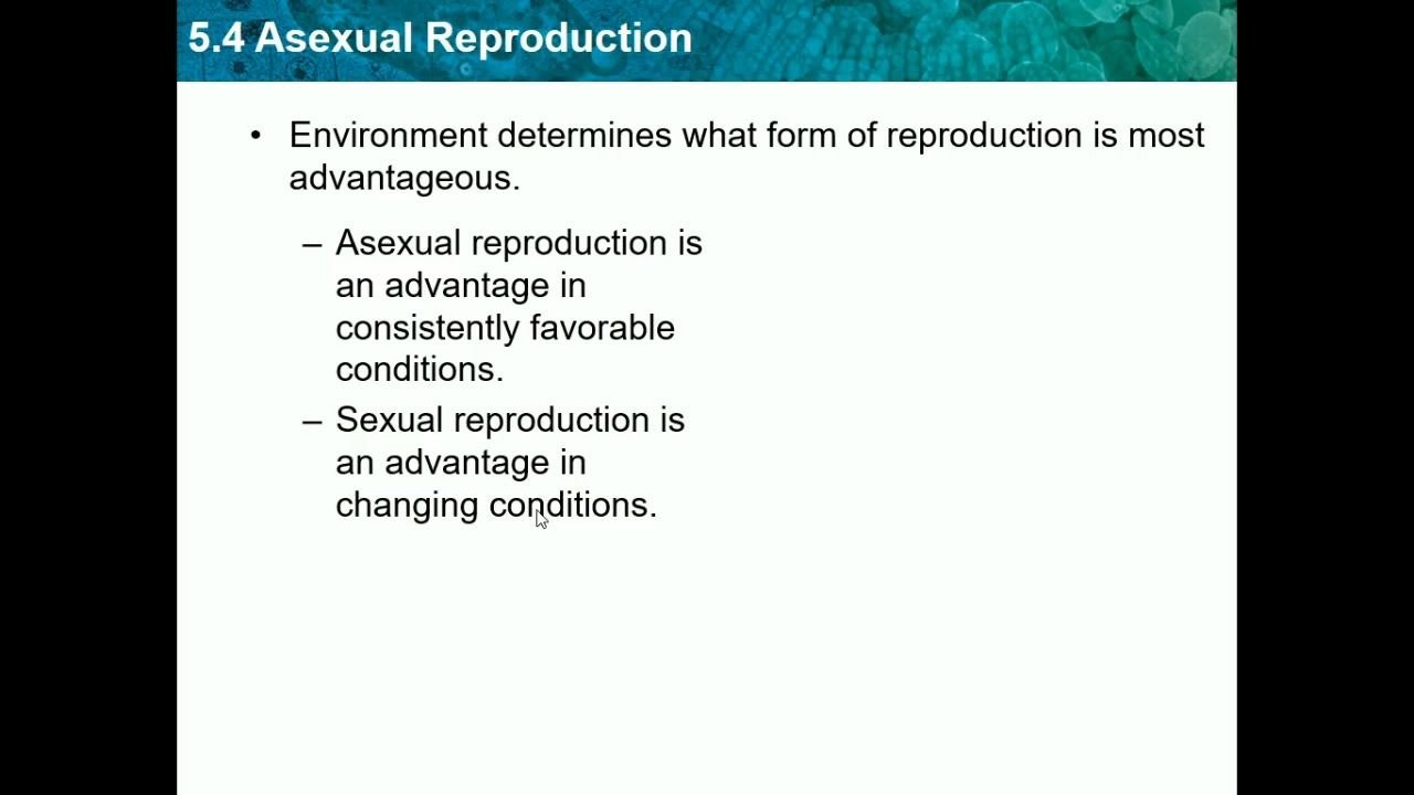 What is asexual reproduction advantageous situation