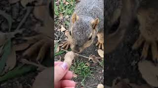 Awsten Insta Live (The One Where He Feeds The Squirrels) — March 25, 2021