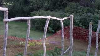 Building A Climbing Bean Pole Fence Trellis - Green Beans