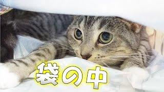 袋の中で楽しそうに遊ぶ様子がかわいい猫の動画です。 袋の外にいる猫の...