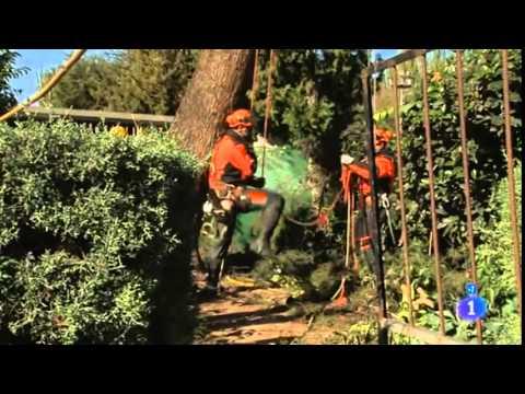 Tecnicas y Trabajos Forestales Dominguez - Comando Actualidad