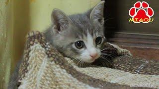 野良子猫を連れて帰ってきた【瀬戸のとら日記】Rescued a stray kitten thumbnail