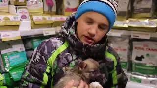 Мальчик покупает щенка