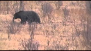 Huntin' Fool Member Brian Shaub: Alaska Brown Bear