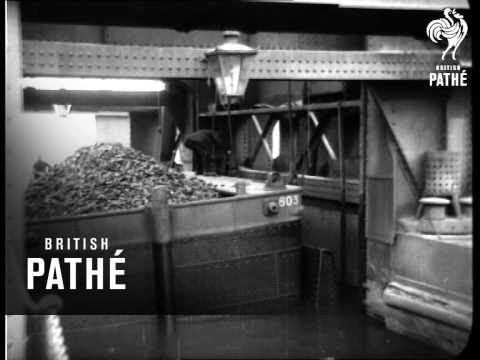 The Snake 1933