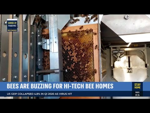Israel's Robot-Controlled Beehive: Keeping Queen Bees And Colonies Alive
