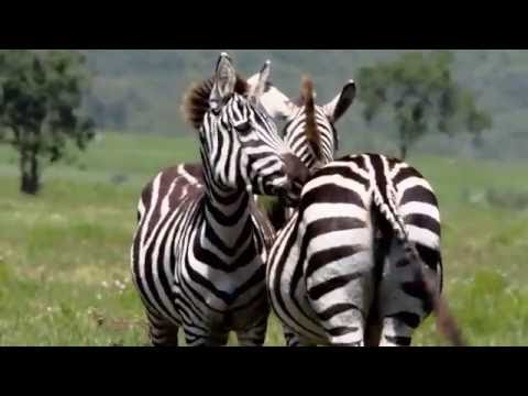 Africa 2016, A Photo and Film Tour, Kenya!