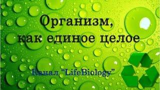 Организм, как единое целое
