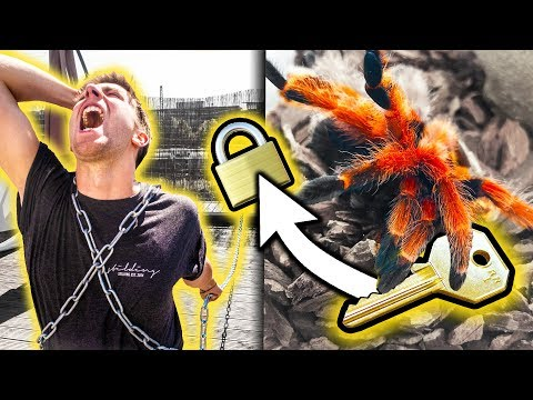 MITBEWOHNER  ANGEKETTET! (Spinne bewacht den Schlüssel🕷😱)