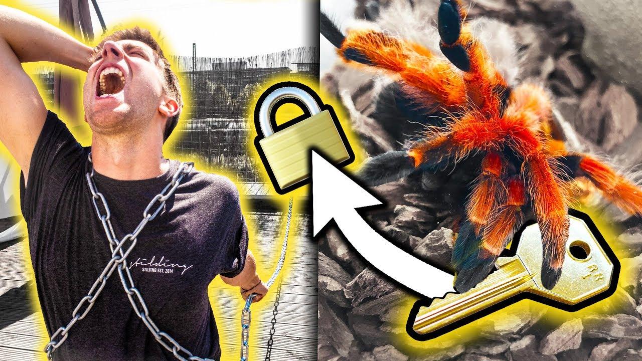 MITBEWOHNER  ANGEKETTET! (Spinne bewacht den Schlüssel????????)