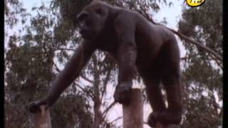 mamifers vida animal x a nens