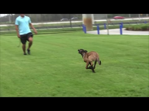 FREE PREVIEW of NEW full lenght Dog Training Video 'The Come Command'