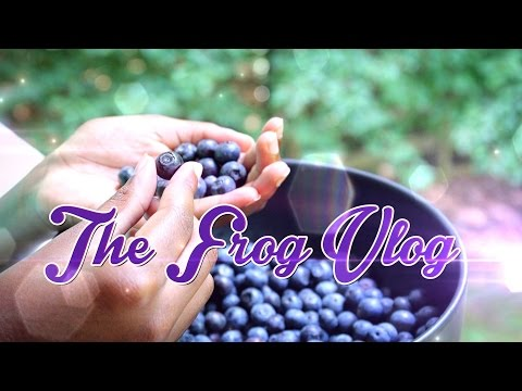 The Frog Vlog: Inspiration for our Doll Berry Farm Craft!! We go Berry Picking!