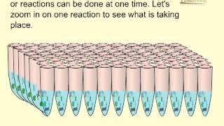 Taqman PCR
