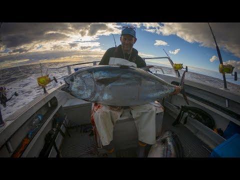 New Zealand Bluefin Tuna Fishing.