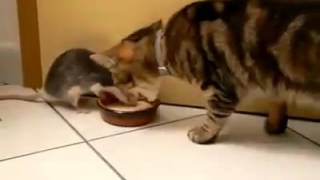 Real Life Tom And Jerry Food Fighting