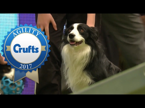 Agility - Large Team Final (Part 2)   Crufts 2017