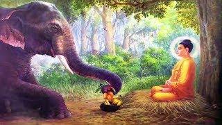 Truyện Đêm Khuya Hay Nhất - Truyện Phật Giáo Đêm Khuya Chọn Lọc Cực Hay
