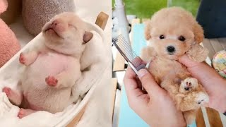 FUNNY ANİMALS CUTE ANİMALS TRY NOT TO LAUGH VİDEOS CUTEST MOMENT 2020 AUGUST SOO CUTE #11