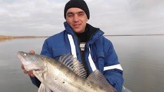 Настоящая рыбалка. Ловля судака