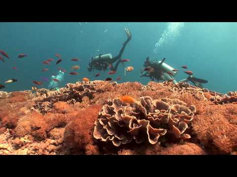 Wonderful Indonesia : Diving