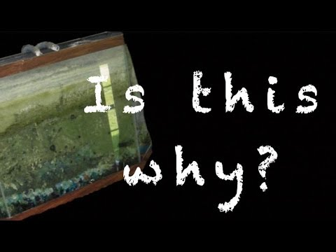 How to clean a fish tank with dirty glass for clear water