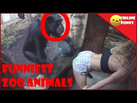 Funniest fails in the zoo! |😂| TRY NOT TO LAUGH COMPILATION 2018 (95% FAIL)