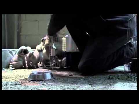 Adopt A Shelter Pet - Stop Breeding Animals