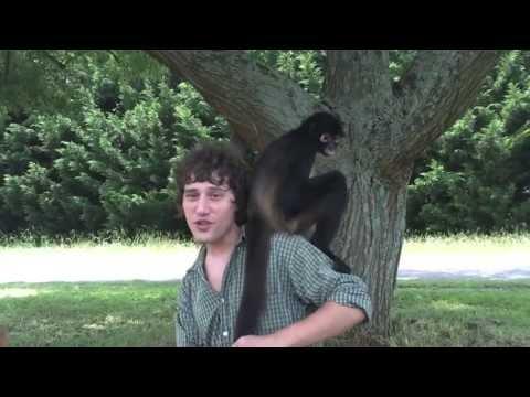 I Wanna Be Your Monkey