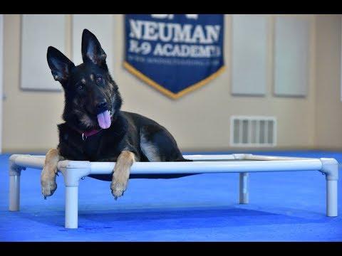 Roxy (German Shepherd) Boot Camp Dog Training Video Demonstration
